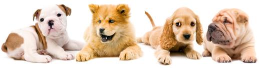 puppy-pre-school